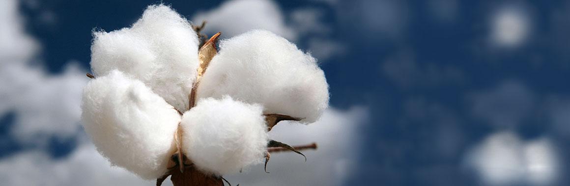 Baumwolldecken-kat01